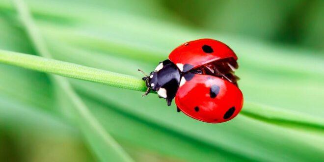 Böcek Korkusu Nedir